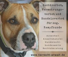 Anwalt für Tierrecht  HUNDERECHT Ackenheil Tierrechtskanzlei bundesweit http://www.tierrecht-anwalt.de