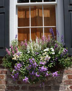 Beautiful purples- window box