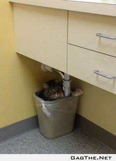 My cat was afraid of the vet, so he hid.