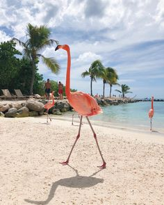 Que saudade desse paraíso 💖 #flamingo #flamingobeach #aruba Flamingo Beach Aruba, Picture Video, Cool Pictures, Outdoor Decor, Wanderlust, Animals, Tattoo, Instagram, Paisajes