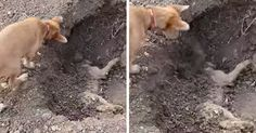 Dog Spotted Burying His Best Friend After He'd Been Hit By A Car, And It'll Break Your Heart | Bored Panda