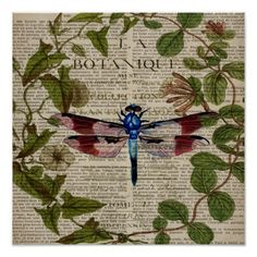 french botanical art vintage dragonfly poster
