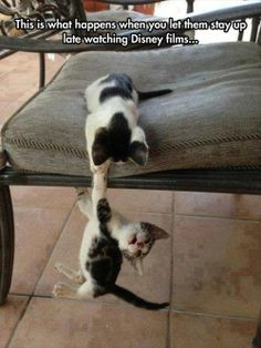 #funnyanimals #funnypictures