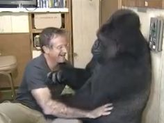 Watch Robin Williams Converse With Koko the Gorilla and Be Charmed