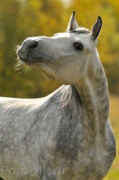 #horses     what?