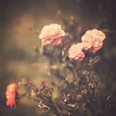 Quand vous n'avez plus d'espoir, regardez l'horizon. Et admirer cette fleur qui pousse, elle ne devrait pas être là mais elle a tout fait pour y parvenir. Donc reprenez espoir comme cette fleur et allez de l'avant.
