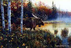 Jim Hansel Master Of His Domain | WildlifePrints.com