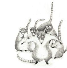 Cancun local Raccoons are waiting for a banana. I drew this view in airplane when I was flying _ Pencil_Illustration. Wensi Zhai