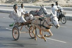 PAKISTAN, Awesome beauty wonderful photography A man one Aram Donkey racing compition in Karachi, Sindh, Pakistan Pakistan Funny, Horse Racing, Horses, Donkeys, Photography, Animals, Image, Muli, Eccentric