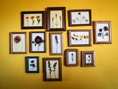 DIY Pressed Flowers Using diff size frames, add matting to the frame (a contrasting color to make flowers pop). Then just press the flowers into the frame & replace the glass. Larger frames for pressing a bouquet, & small frames for wildflowers or 1-3 individual flowers