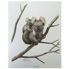 "Koala Bear print signed by artist Guy Goheleach. 20""h x 18""w."