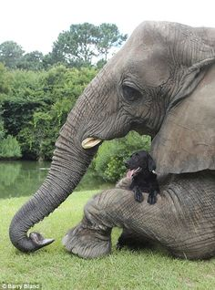Elephant plays fetch with her puppy pal! - Imgur