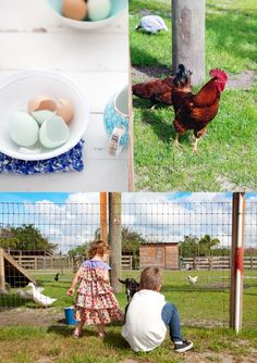 chickens, fresh eggs, and kids who know the source of the food they are eating