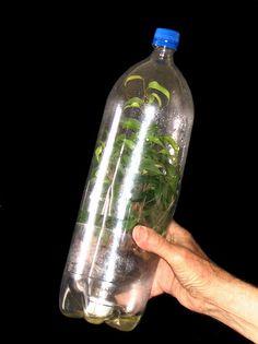 1000 Images About Stem On Pinterest Plastic Bottle