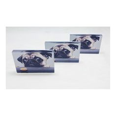 """Art and photography are at the core of what we do...but that doesn't mean we don't also love pets! We made this set of 6""""x9"""" metallic print FotoBlocks for a customer and wanted to share them with you all. To order your own FotoBlock just drop us a line at info@makemyfotofoam.com. #pets #dogs #pugs #cute #adorable #playful #hungry #family #puppy #vsco #vscool #vscocam #vscophile #whiteborder #nyc #made_in_ny #portrait #2x3 #metallic #print #frame"""