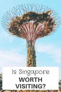 Is Singapore Worth Visiting? Planning on #Singapore and are wondering if it is worth a visit for a few days. Singapore is a modern well-developed city-state with a melting pot of culture and history. Lets us explore this more.   singapore travel places   singapore travel things to do in   singapore food chinatown   singapore photography   #traveling #travel #visitsingapore Little India Singapore, Visit Singapore, Singapore Food, Singapore Travel, Travel Things, Places To Travel, Travel Destinations, Singapore Itinerary, Stuff To Do