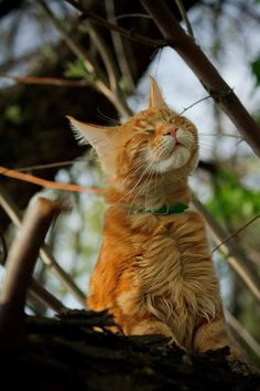 Wind in my fur
