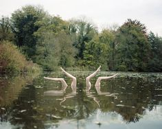 Beautiful Illusion of Synchronized Swimmers in Nature - My Modern Metropolis