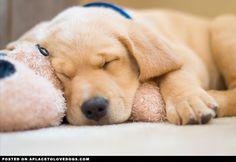Sleepy doggies - newsletter
