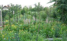 Blog a vegyszermentes kertészetről. Biokert. Konyhakert vegyszermentesen. Bevált praktikák a kertben.