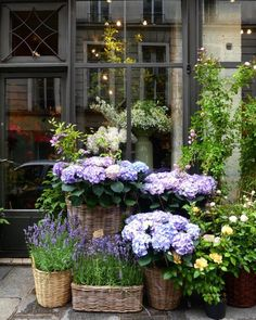 Affordable And Effective Cottage Garden Designing Methods For Your Home Your home is your world, and much like the world around us, looks are important. You may take your time to care for your house, but what about your yard? Container Plants, Container Gardening, Back Gardens, Outdoor Gardens, Pot Jardin, Dream Garden, Garden Planning, Garden Inspiration, Garden Pots