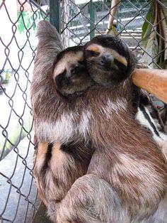 Sloth love!