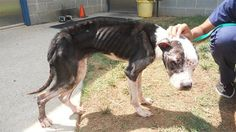 Justice For Echo! Badly Injured, Malnourished Dog Used As Dog Bait And Dumped in Matthews! | PetitionHub.org