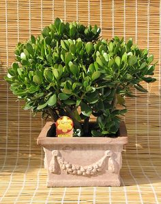 Top 10 Hard to Kill House Plants - yes please! :)