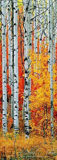 Fall Colors At Elbow Lake Lodge Wood Pinterest Aspen Autumn