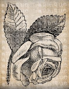 Antique Rose Tattoo maybe done in white ink?