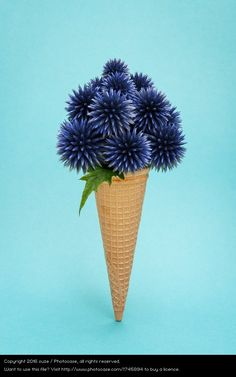 ice cone with flower, still life photography