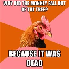 """Anti-Joke Chicken: All That Hard Work for Nothing? - Funny memes that """"GET IT"""" and want you to too. Get the latest funniest memes and keep up what is going on in the meme-o-sphere. Cheesy Jokes, Corny Jokes, Stupid Jokes, Good Jokes, Terrible Jokes, Daily Jokes, Sarcastic Humor, Chicken Jokes, Funny Chicken Memes"""