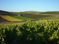 """Rheinhessen with its hundreds of hills and vineyards is also called """"land of the thousand hills""""."""