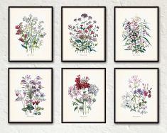 Fleurs de Jardin Print Set No. 5 - Botanical Print Set