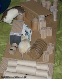 Beschäftigung für Ratten