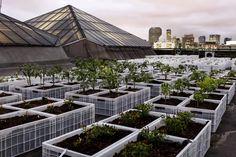 O shopping Eldorado plantou uma horta no seu telhado. Foto: Divulgação