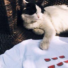 Même les chats ne s'en passent plus ! Monsieur Tshirt, Book Instagram, T Shirt, Books, Animals, Cats, Bebe, Supreme T Shirt, Tee Shirt