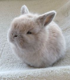 Adorable Pet Rabbit <3