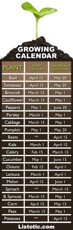 Vegetable garden growing calendar with starting and transplanting dates..