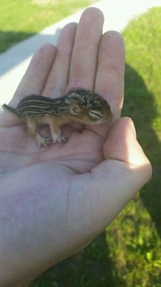 It's a baby squirrel
