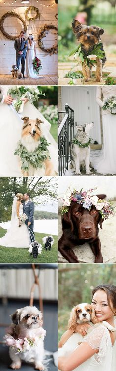 The prettiest pooches!  How to include dogs in your wedding plans at GS Inspiration - Glitzy Secrets