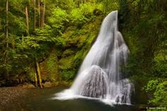 cloud forest oregon - yahoo Image Search Results