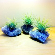 Crystal Air Plants Very Cool Gift Idea by TerrariumLaboratory Terrarium Plants, Succulent Terrarium, Planting Succulents, Planting Flowers, Cool Plants, Air Plants, Garden Plants, Indoor Plants, Tillandsia Usneoides