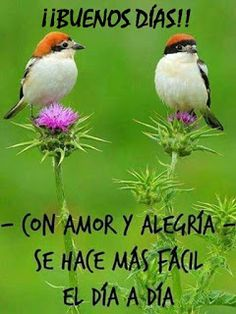 The Woodchat Shrike (Lanius senator) - Photo Andrés Miguel Dominguez Pretty Birds, Love Birds, Beautiful Birds, Beautiful Couple, Exotic Birds, Colorful Birds, Kinds Of Birds, Bird Pictures, Little Birds