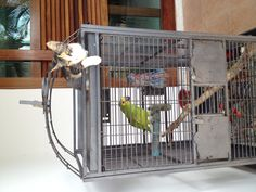 There exists an uneasy peace!  Miley and Papa G share a cage....