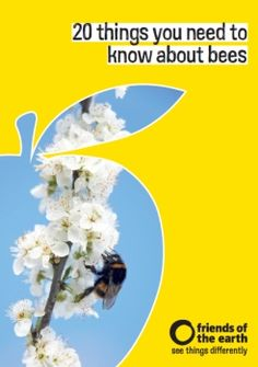 '20 things you need to know about bees'. Download our free booklet or order a printed copy.    #free #bees #education #environment