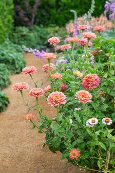 Potager Garden Most Popular Kitchen Garden Design Ideas 11 - Cut Flower Garden, Flower Garden Design, Beautiful Flowers Garden, Flower Farm, Flower Beds, Amazing Flowers, Beautiful Roses, Flower Gardening, Nice Flower
