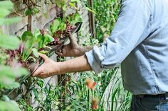 Make a space-saving salad planter. Another drainpipe garden idea and how-to.