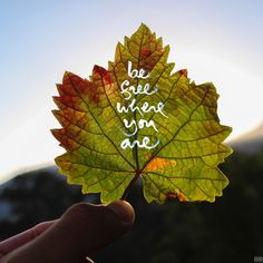 Be free where you are - Thich Nhat Hanh. Leaf Quotes, Buddhist Quotes, Thich Nhat Hanh, Mindful, Plant Leaves, Calligraphy, Yoga, In This Moment, Plants