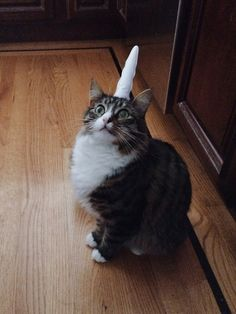 A rare mewnicorn sighting <------This one is for Melanie. Ha!